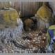 Article : La pratique des sectes, rituels occultes dans la société africaine